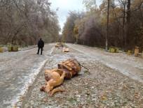 Вандалы разрушили экоаллею деревянных скульптур в Ельниковской роще Новочебоксарска