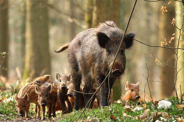 Игнатьев доехал докарантинного поста поафриканской чуме свиней